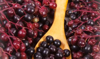 dried elderberry syrup recipe